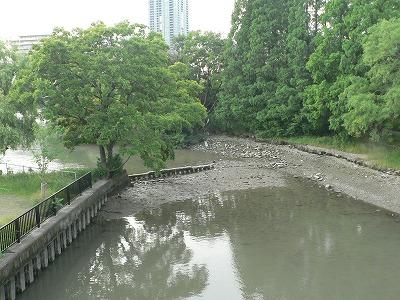 大川貯木場跡の干潟02