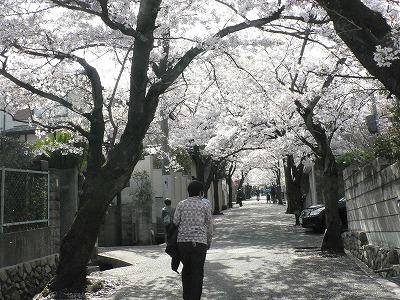 寿楽荘の桜