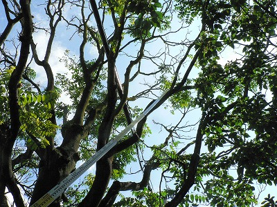 枯れ枝がふえています