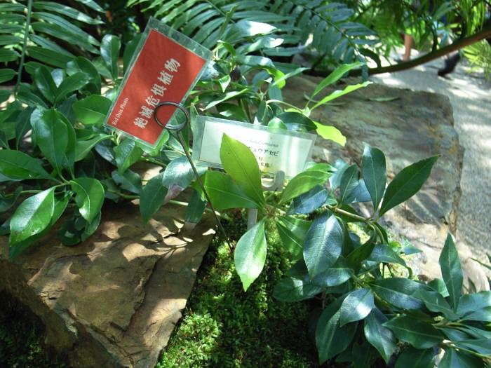 絶滅危惧植物