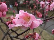 桜狩 (2)