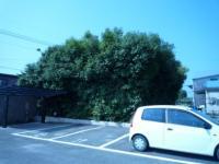 植木(斜め)