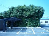 植木(側面)