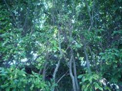 植木(茂み)