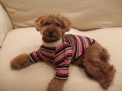 D+Diamonds 犬服 冬の新作です!