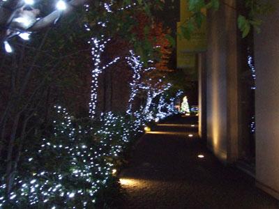 ラフェンテの小道 クリスマスイルミネーション