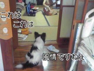 クンちゃん和デビュー。
