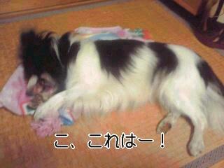 歯磨きロープ1