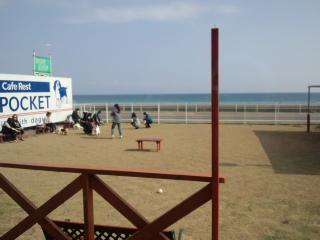 駿河湾×ドッグカフェ
