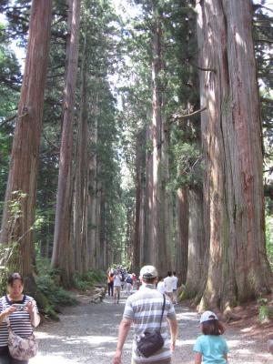 杉並木2 300