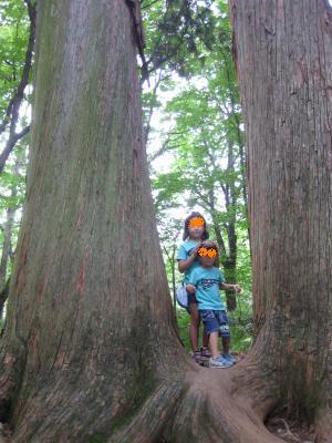 杉並木3 300