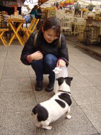 DogJunko_convert_20080816182033.jpg