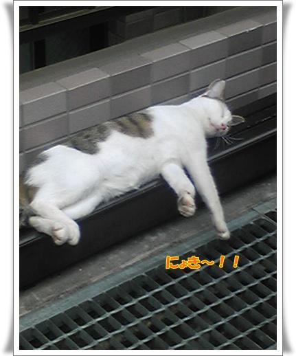 Image493.jpg