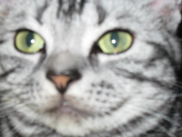 THE ネコ