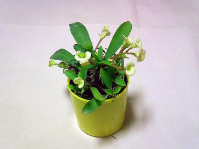 花キリン01