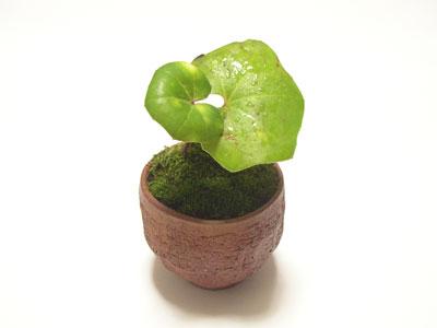 豆盆栽02
