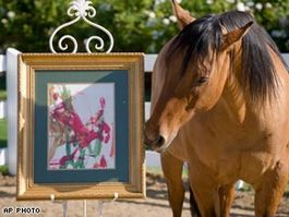 【NEVADA】ネバダの「絵を描く馬」、国際コンクールで佳作に