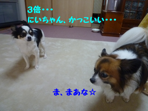 2012216-15.png