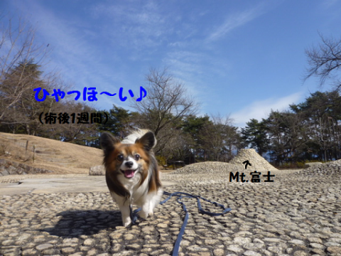 2012221-5.png