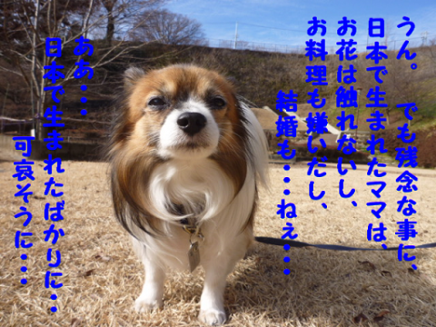 2012228-3.png