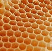 蜂の巣[1]