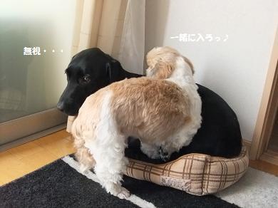 これ俺のベッドやねんから~