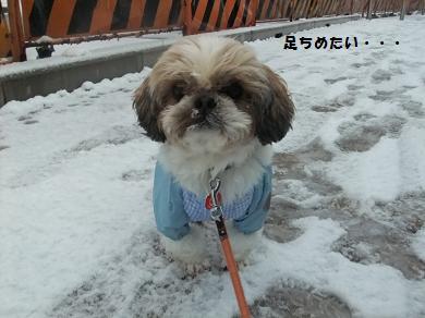 俺は散歩行きたくないのに・・・