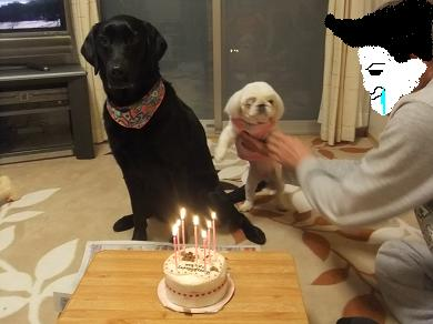 アタシの誕生日じゃないのに~!