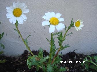 お庭しごと1