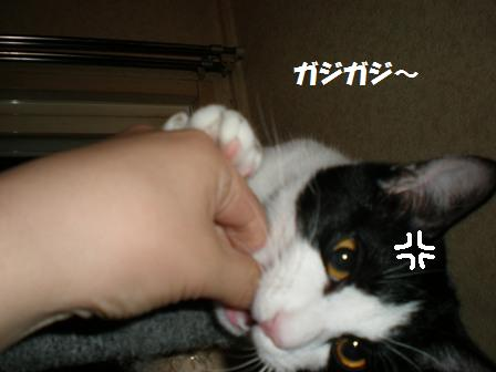 4_P2020016.jpg