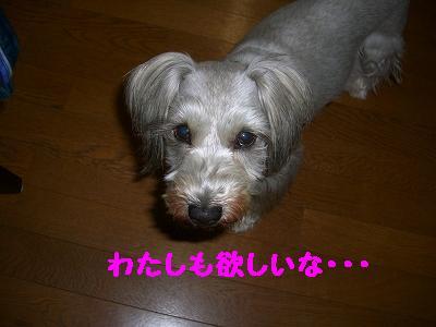 CIMG8581.jpg