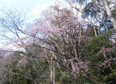 2012.03.13 鎌倉 桜