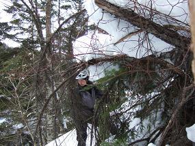 立木でビレー