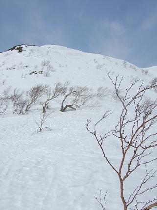 頂上からスキーで