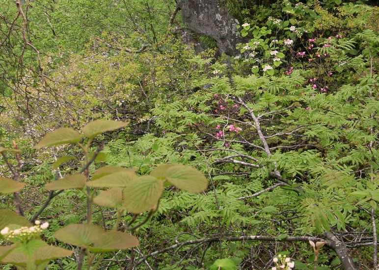 山の中の庭園2