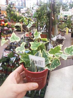 観葉植物④
