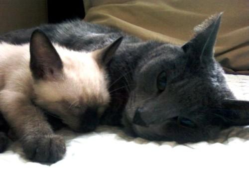 ヒボムと子猫