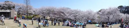 Sakura3.jpg