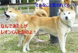 chkochan_20081026090353.jpg
