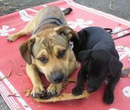 twodogs2.jpg