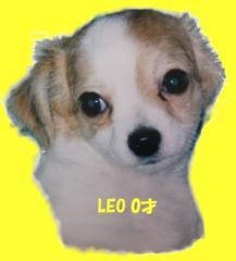 LEO 0才