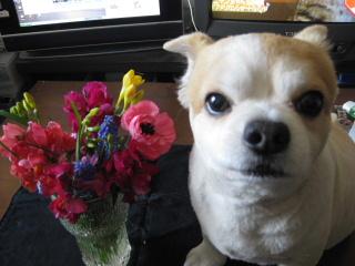 お花と・・・