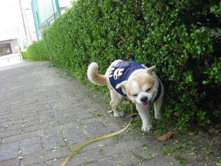 2009.0419散歩3