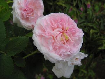 道端にあった花