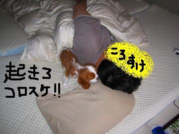 朝だっぴー!起きるっぴー!