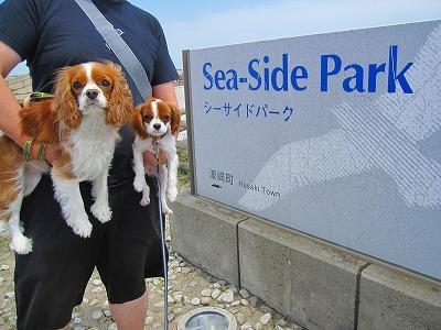 波崎町シーサイドパークを発見!