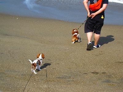 パティは初めての海。