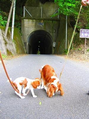 スナック「あやめ」の看板が目印。トンネルへGO!