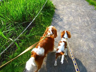 ビオガーデンを並んでお散歩。