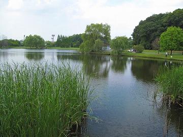 大きな池があって、釣りを楽しんでる人が多いっぴ!